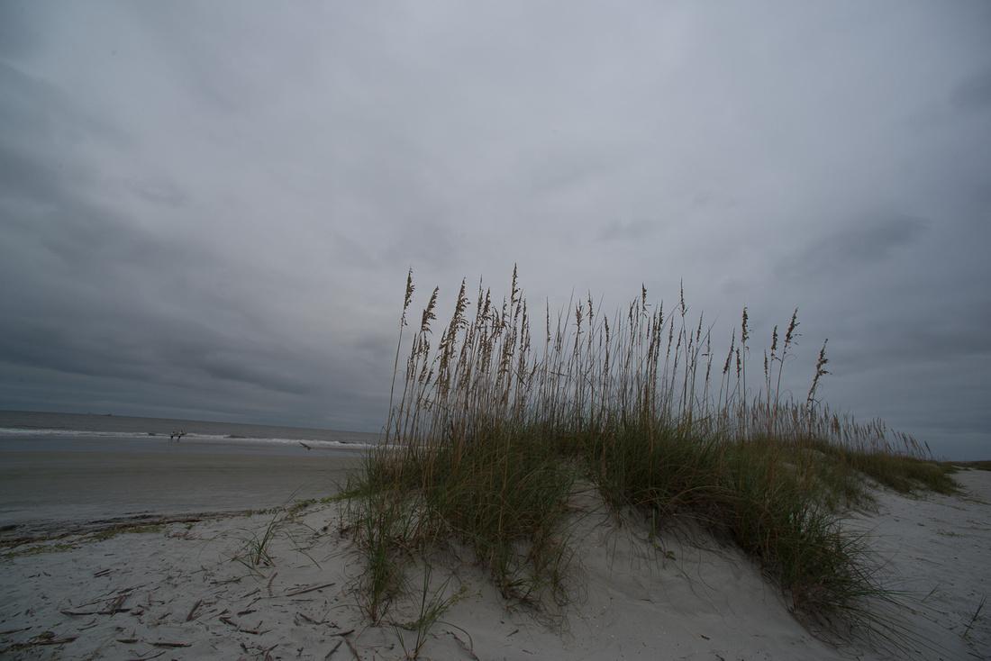 Beach Grass SOOC-1