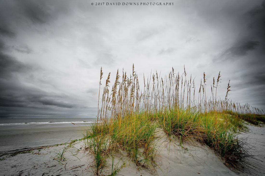 Beach Grass LR Edit-1